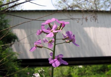13 loux side flower